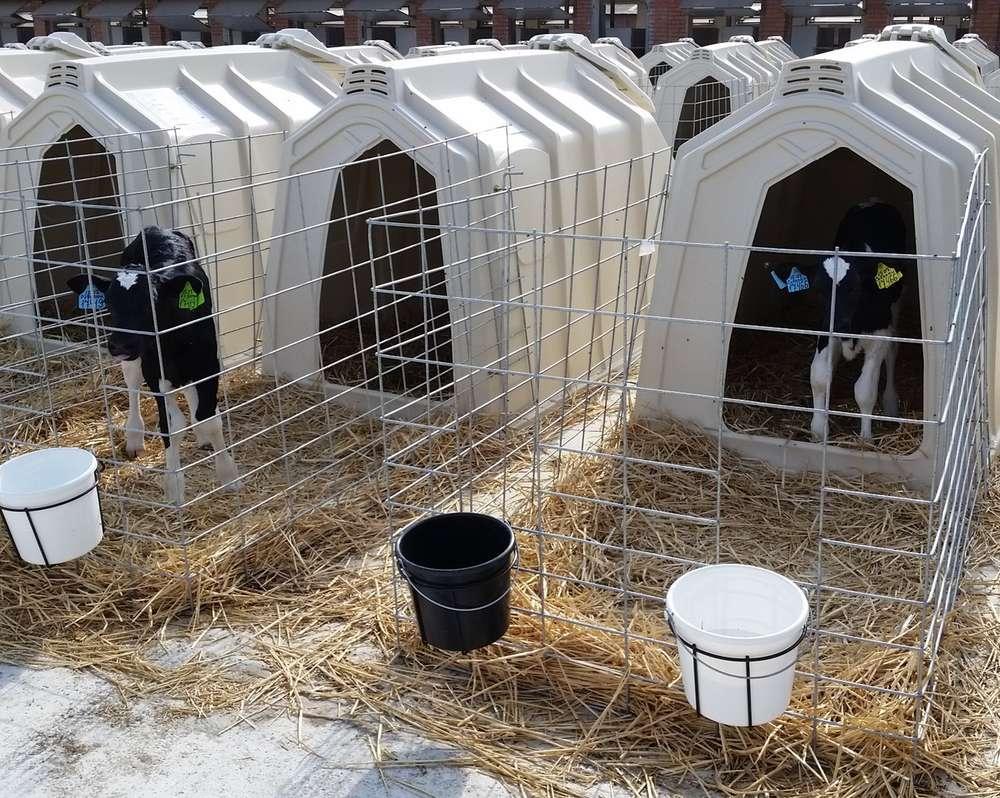 Индивидуальный домик для теленка
