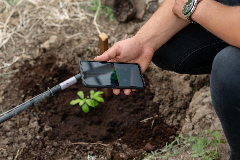 Учёные КФУ оцифровали первую в России оливковую рощу в теплице