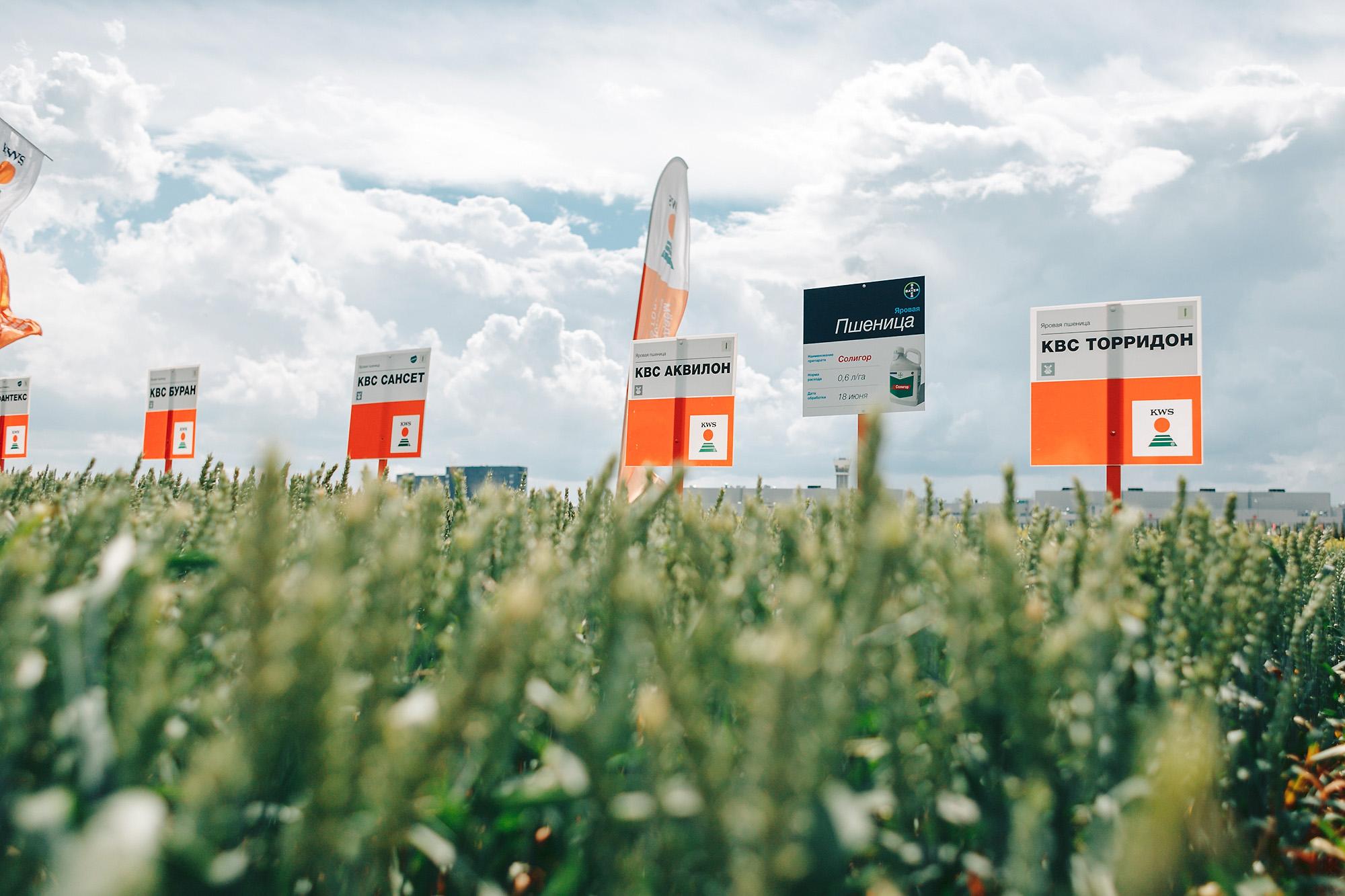 Озимые на выставке «АГРОВОЛГА 2022»