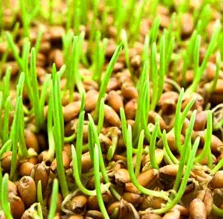 Производители биологически активных органических удобрений